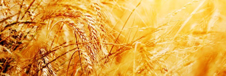 Nanotechnologia w rolnictwie